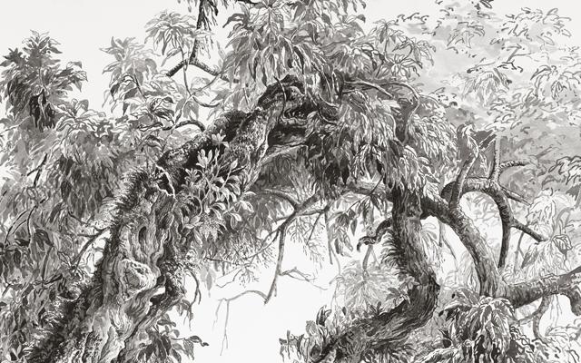 Jardin Botanique — Dessin préparatoire 8